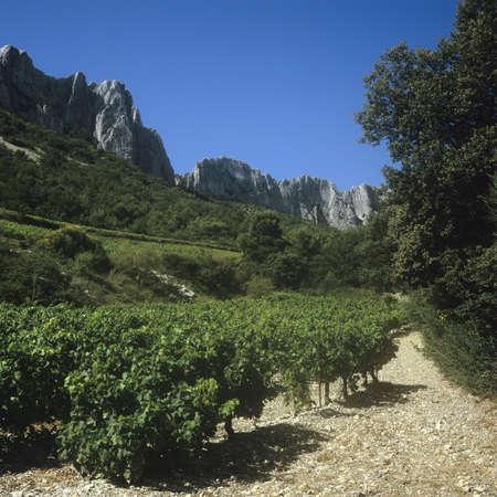 du ร    ก ร: cotes du rhone vineyards dentelles de montmarail vaucluse provence south of france
