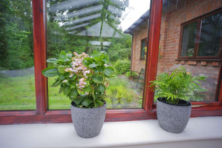 conservatories: conservatory with plants room in  next to garden Stock Photo