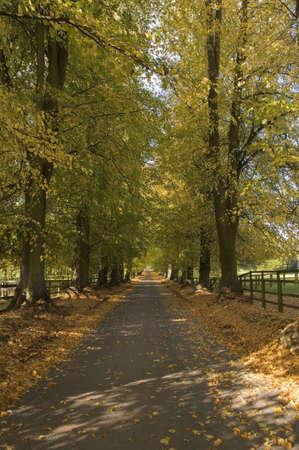 autumn woodland photo