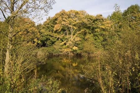 severn: autumn woodland Stock Photo