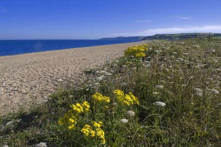 southwest: zand spugen Slapton het zuiden hammen Devon op de South West Coast Path Stockfoto