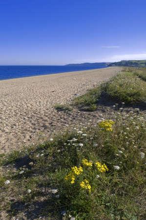 south west coast path: spiedo slapton sabbia a sud prosciutti devon sulla costa sud occidentale percorso