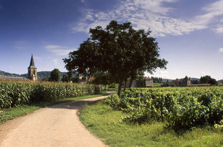 growers: france midi pyrenees lot the lot valley near cahors vineyards