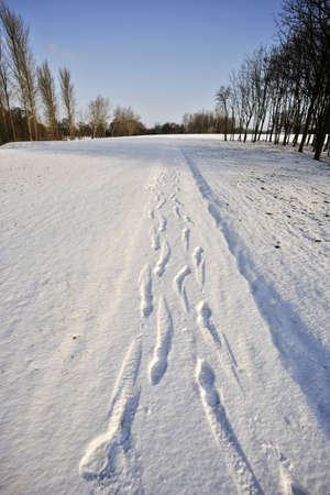 redditch: A snow covered rural landscape in the countryside with footprints