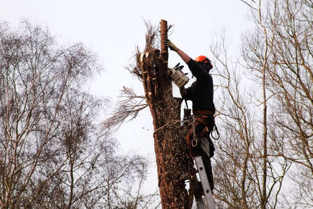 forestry industry: a tree surgeon chopping down a rotten tree Stock Photo