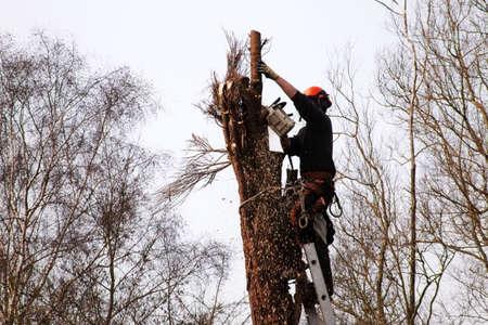 un árbol cirujano cortando un árbol podrido