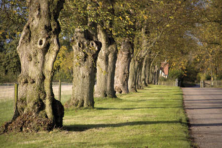 country lane warwickshire midlands england uk photo