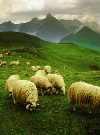 french countryside: sheep col d Stock Photo