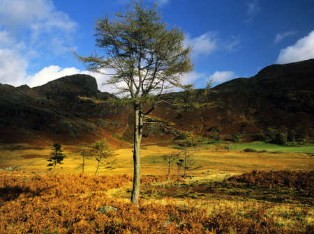langdale pikes: langdale in the english lake district cumbria england uk Stock Photo