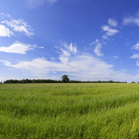 a field in the countryside in a rural environment photo