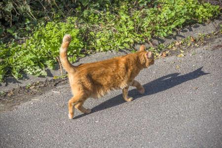 en mont�e: un chat roux tom marche en mont�e Banque d'images