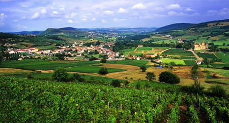 europe vineyards burgundy france Standard-Bild