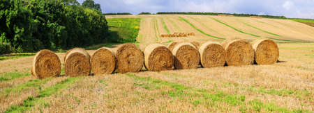 hay bales in a field on a farm Stock Photo - 17292497