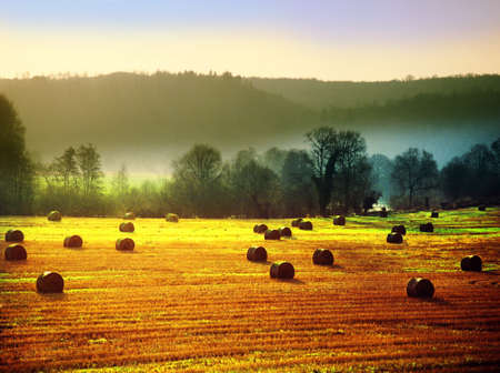 hay bales in a field on a farm Stock Photo - 17512529