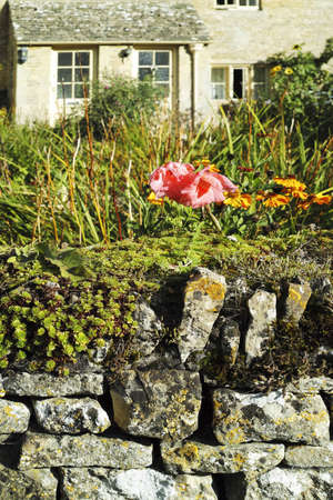 flowers on a dry stone wall outside a cottage in a cotswolds village Stock Photo - 17949201
