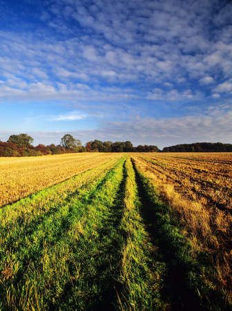 generic location: a field in the countryside in a rural environment