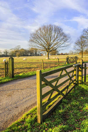 generic location: a tarmac country lane or road in a rural environment in the countryside