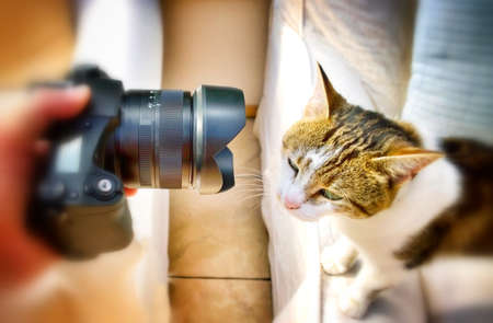 pet photography: Photographing domestic cat pet