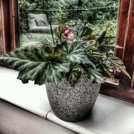 conservatory: Conservatory