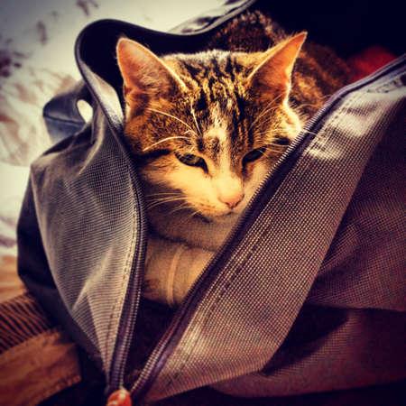 holdall: Cat