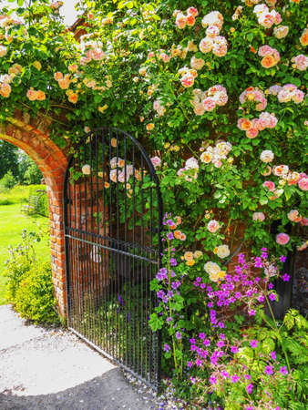 Lush green english walled garden on a summers day