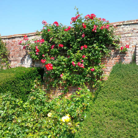 packwood: Walled garden