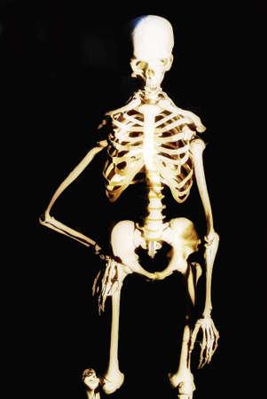 Modell Des Menschlichen Skeletts In Labors Für Die Lehre Verwendet ...