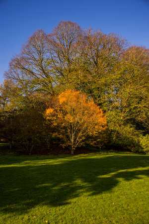 batsford arboretum in the cotswolds
