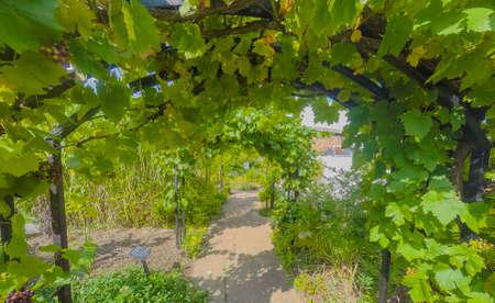 greenhouse ryton organic gardens nr. coventry midlands england