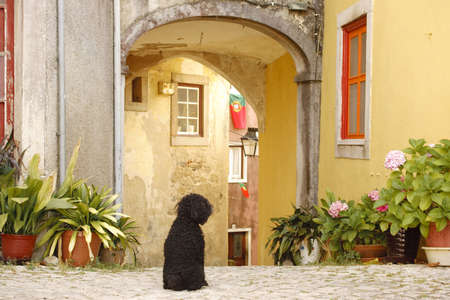 A black dog is sitting on the cobblestones at the entrance to an arched courtyard surrounded by old-world homes in Sintra, Portugal. Potted plants line the walls. Horizontal shot. Stock Photo - 6692583