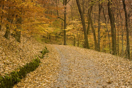 backwoods: Fallen autumn leaves cover a backwoods country road leading through a forest in Tennessee. Horizontal shot.