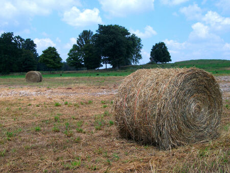 northeast ohio: Rolls of hay ready for the barn  Image captured in Rural Northeast Ohio