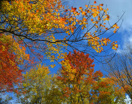northeast ohio: Colorful Fall   Autumn leaves in Northeast Ohio  Stock Photo