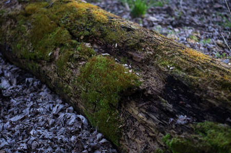 Moss growing on a fallen tree in the woods near the Des Moines river