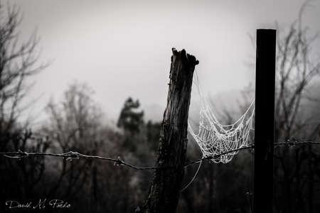 cobweb: Cobweb Stock Photo