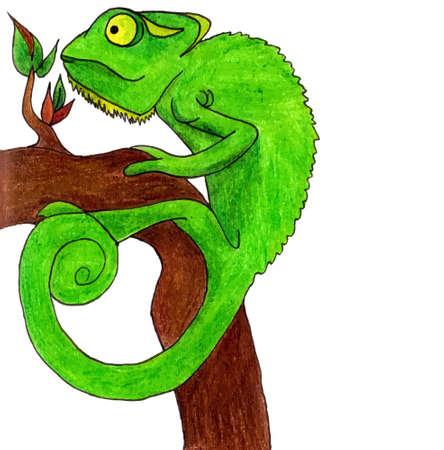 chamaeleo: Chameleon cartoon vector illustration set card sign Illustration