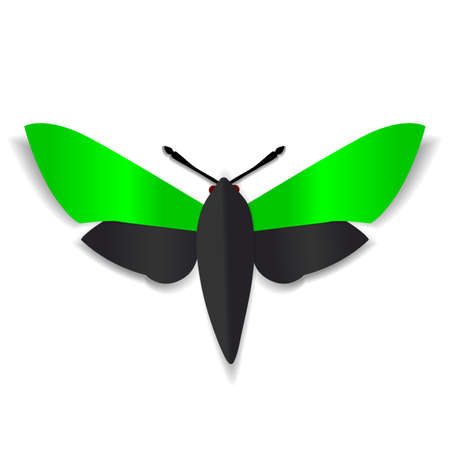 red eyes: A black and green paper butterfly with dark red eyes.