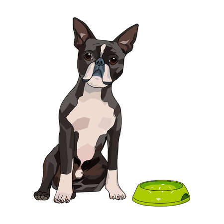 A vector illustration of cute and kind dog with the dog bowl. This is a vector illustration. it can be used for t-shirts books and for other design projects.