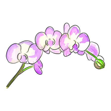 The watercolor vector illustration of bouquet a pink orchid flowers. This illustration will be good to use as a print for apparel and in other design projects. Illustration