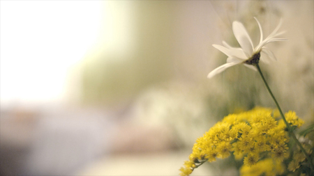 Daisy on the bedside table. Daisy flower on green meadow. spring daisy in the meadow. Daisy flower, Summer time, Spring flowers.