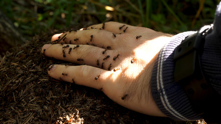 Mans hand with a swarm of ants. Little ants crawling on a mans hand Stock Photo