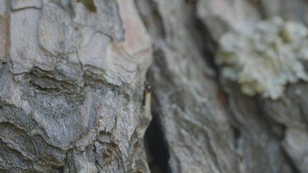 diligent: Ants in the tree bark. The Orange Ants are lining up from the ground to the trees to find food in their nests