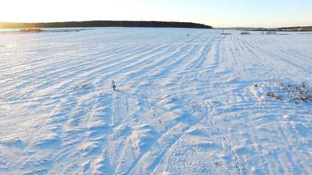 Aerial view on Man in sportswear walking in a field of snow. backward aerial over man walking with snowshoes on snow covered field near pine forest woods in winter. Фото со стока