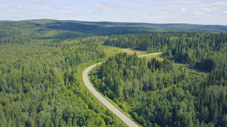 Aerial view of a road in autumn surrounded by pine tree forest. Clip. Top view of the road in the forest.