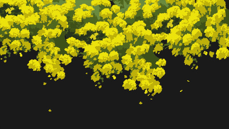 Closeup view of abstract, beautiful, blooming, yellow acacia tree, isolaed on black background. Animation of bright, cartoon, yellow flowers and green leaves swaying in the wind