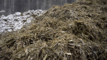 Close up for the pile of old grass and humus prepared for soil fertilization, agriculture concept. Footage. Biomass and mulch, organic material at a farm. Standard-Bild - 119563280