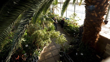 Top view of green palm tree petals in a greenhouse, nature concept. Stock footage. Man walking among green plants in botanical garden.