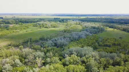 Aerial view of the forest during the summer. Clip. Top view of the green forest area Banco de Imagens