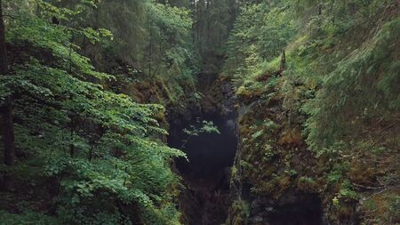 Amazing view of picturesque deep ravine with the debris of rocks and trees covered with moss in forest near the high old trees and shrubs. Beautiful view of mysterious forest
