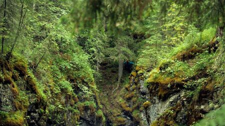 Man stands at cliff in woods. Stock footage. Top view of traveler stuck in gorge over cliff in forest. Mossy steep ravine in which traveler got stuck during forest hike Banque d'images - 128898934